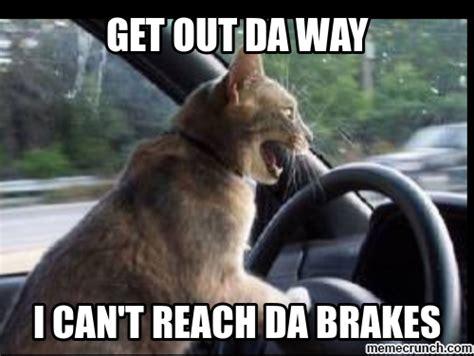 Driving Memes - cat driving meme quotes