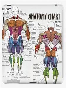 U0026quot Anatomy Chart