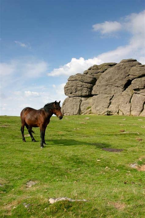 dartmoor pony ponies england cornwall animals devon snow native exmoor reserved rights