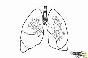 Image Result For Drawing Of Lungs