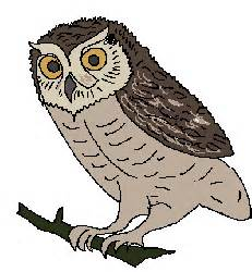 Realistic clipart owl - Pencil and in color realistic ...