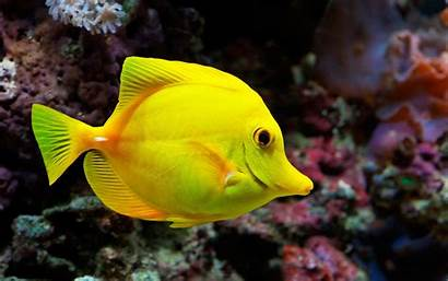 Fish Ocean Sea Underwater Fishes Tropical Wallpapers