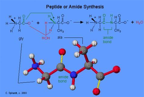 peptide bonds chemwiki