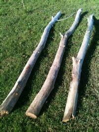 branche de bois flotté branche de bois flott 233 et racine de toutes tailles