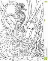 Adult Seahorse Colouring Ocean Drawn sketch template