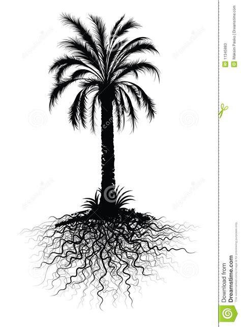 palm tree sketch stock vector image  tree illustrated