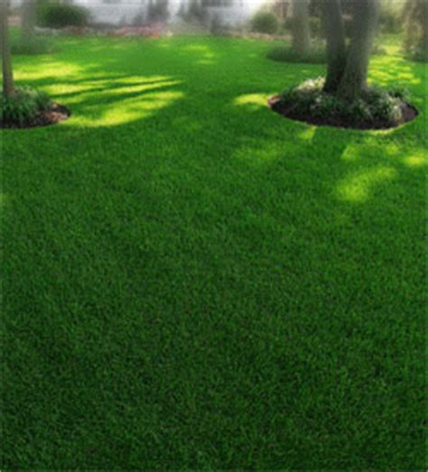 best looking lawn grass oregon invasive species high cost of cheap seed