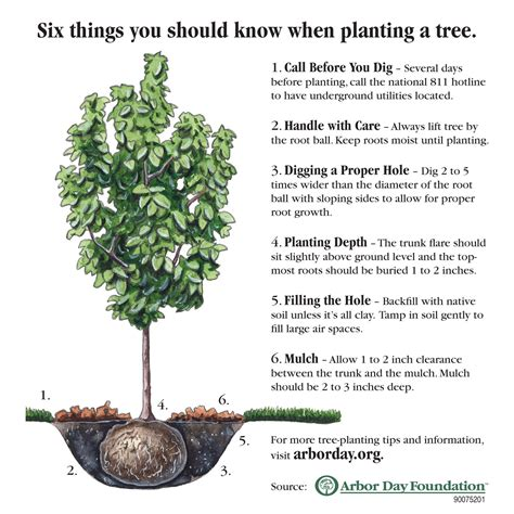 how to plant a tree urban forestry
