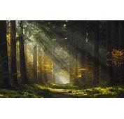 Sun Rays Morning Forest Path Mist Trees Grass