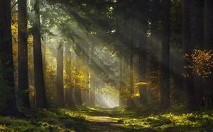 Sun, Rays, Morning, Forest, Path, Mist, Trees, Grass, Nature, Landscape, Wallpapers, Hd, Desktop