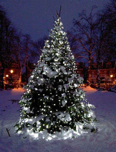 christmas lights for trees outdoor tree light ideas light ideas inspiration lights4fun co uk