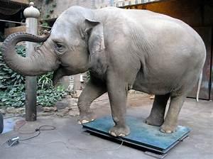 Was Wiegt Eine Europalette : wie wiegt man einen elefanten ~ Watch28wear.com Haus und Dekorationen