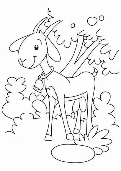 Coloring Goat Koza Printable Kolorowanki Farm Kozy