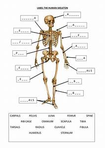 Label The Human Skeleton