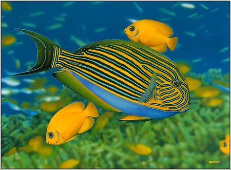 types of fish pictures hd wallpaper download - Awesome hd