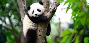 Press Release Rankings: Slammed by the Panda?   Seer ...