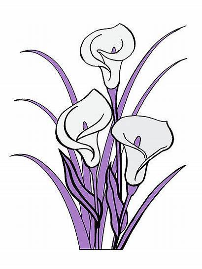 Lily Calla Flower Clipart Purple Clip Drawing