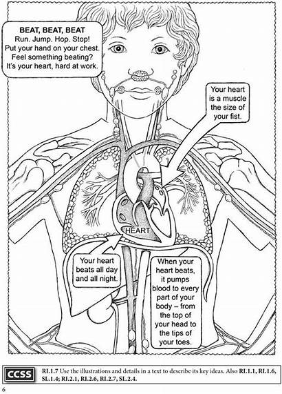 Coloring Human Pages Anatomy Dover Publications Systems