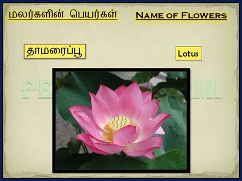flowers  tamil part ii youtube