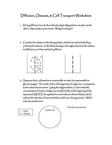 16 Best Images Of Diffusion Osmosis Active Transport Worksheet  Cell Transport Diffusion And