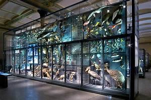 Reiseführer Für Berlin : evolution in action museum f r naturkunde ~ Jslefanu.com Haus und Dekorationen
