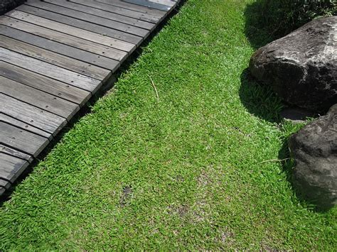 Help! I Need To Find Turf Suppliers Near Me