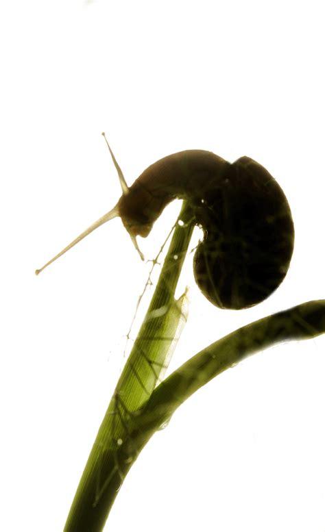 un oeil hypermetrope exercice rodolphe franchi portrait d un escargot l œil de la tion