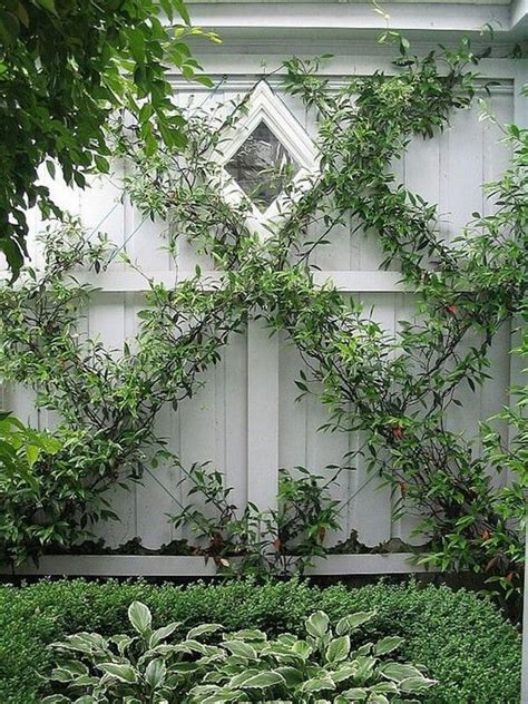 Climbing Plants  12 Ideas For Arranging The Garden With