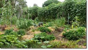 Mon Jardin En Permaculture by How To Establish A Small Space Intensive Food Garden The