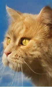 Profile of a Cat 4k Ultra HD Wallpaper | Hintergrund ...