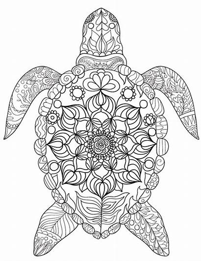 Turtle Coloring Sea Pages Adult