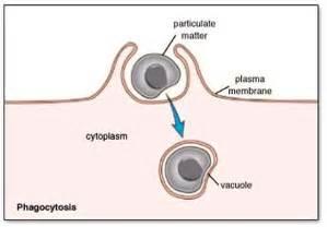 1 5 The Origin Of Cells