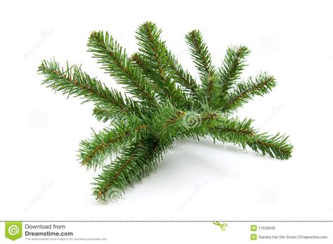 plastic bare twig from christmas tree royalty free stock