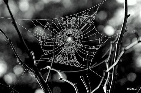 composition toile d araignee toile d araign 233 e araign 233 e et toile d araign 233 e