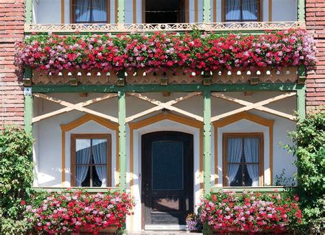 Pflegeleichte Balkonpflanzen Ganzjährig by Ganzj 228 Hrige Balkonpflanzen Winterhart Im K 252 Bel
