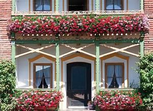 Winterharte Pflanzen Für Balkon : ganzj hrige balkonpflanzen winterhart im k bel balkonkasten ~ Somuchworld.com Haus und Dekorationen