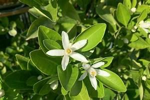 Mediterrane Pflanzen Winterhart : mediterrane pflanzen die 10 wichtigsten mediterranen pflanzen tipps ~ Frokenaadalensverden.com Haus und Dekorationen