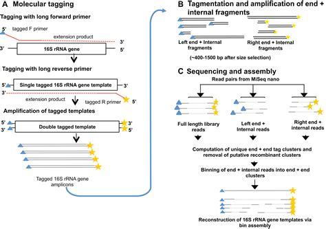 Illumina Sequencing Protocol by A Method For High Precision Sequencing Of Near Length