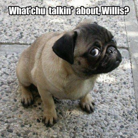 Pug Memes - pug meme lol i love that line cute pug memes