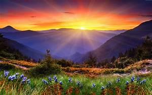 Sunrise, New, Zeland, Mountain, Field, Flowers, Wallpaper, Hd