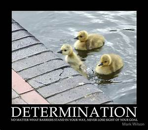 Determination | Live ~ Learn ~ Communicate