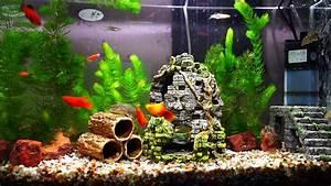Liter Berechnen Aquarium : my 50 liter aquarium youtube ~ Themetempest.com Abrechnung