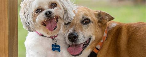 male female dogs personality differences pedigree