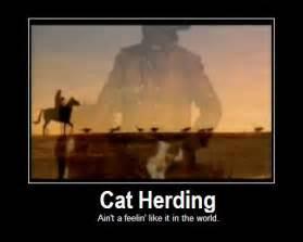 cat herder herding cats quotes quotesgram