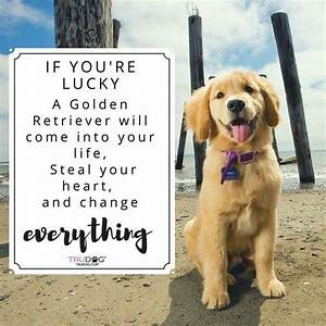 25+ Best Ideas about Golden Retriever Quotes on Pinterest
