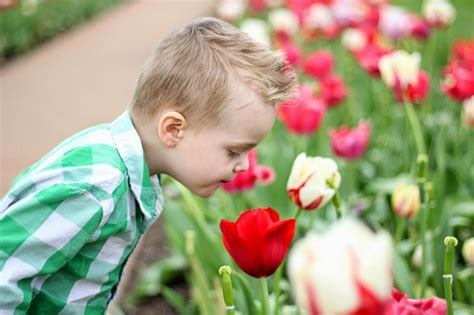 stop and smell the tulips raising roberts