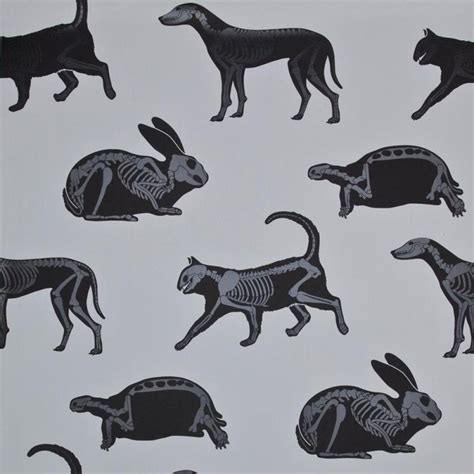 Animal Skeleton Wallpaper - here are animal skeletons of various animals