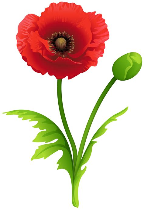 red poppy clipart image gallery yopriceville high