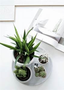 Pflanzen Für Innen : pin von mika i auf zimmerpflanzen pinterest zimmerpflanzen blumendeko und gr n ~ Sanjose-hotels-ca.com Haus und Dekorationen