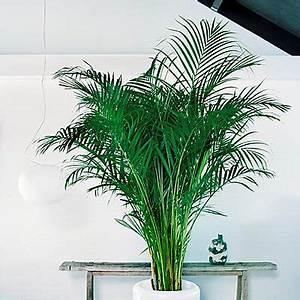 Plante Tropicale D Intérieur : plante d appartement exotique florideeo ~ Melissatoandfro.com Idées de Décoration